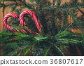 Candy Canes on a Christmas tree 36807617