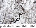 Taking a picture of the snow scene of the stream in the valley of Yakumo-cho, Yakumo-cho, Hokkaido 36808061