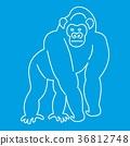 outline, line, monkey 36812748