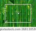 Green bamboo fram background 36813059