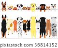 สุนัข,สุนัช,สัตว์ 36814152