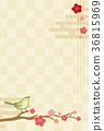 꾀꼬리 매화 체크 36815969