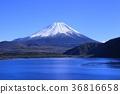 ภูเขาฟูจิ,ภูเขาไฟฟูจิ,ท้องฟ้าเป็นสีฟ้า 36816658