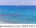 카프리 섬 푸른 바다 4 36825953