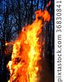 Burning of Maslenitsa Scarecrow in evening 36830841