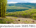 Woodland landscape, beech tree forest in spring 36857861