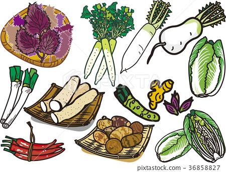 蔬菜16 36858827