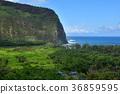 Waipio Valley, Island of Hawaii 36859595