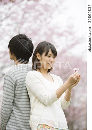 벚꽃 앞에서 뒤로 돌아 서서 커플 36860837
