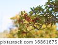 식물, 열매, 과실 36861675