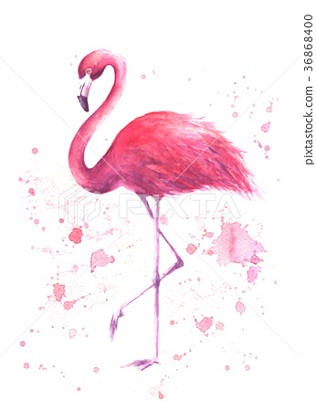 Watercolor pink flamingo 36868400
