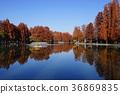 가을, 가로수, 늪 36869835