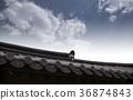 한옥, 지붕, 하늘 36874843