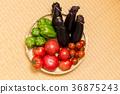 番茄 西紅柿 小西紅柿 36875243