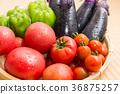什錦夏季蔬菜(家庭花園)Shizuru 36875257