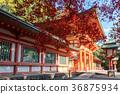 Hikawa Shrine Tower Gate and Autumn Leaves 36875934