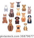 Cartoon Dog Breeds Isolated Illustrations Set 36879677
