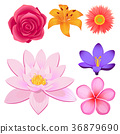 Gorgeous Flower Buds Isolated illustrations set 36879690
