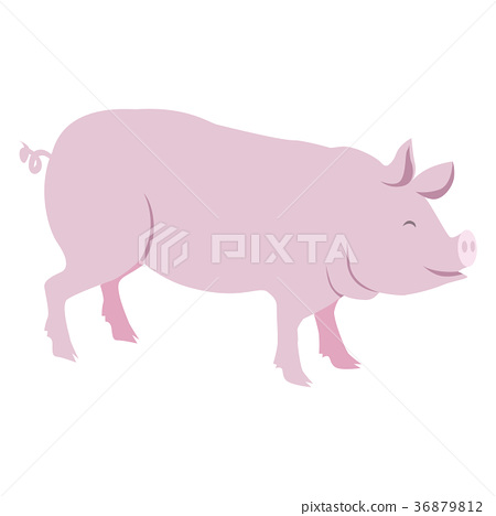 Pink Pig Vector Illustration Isolated on White 36879812