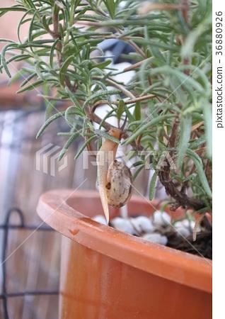 Tree climb snail 36880926