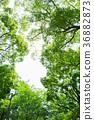 ต้นไม้,ธรรมชาติ,ผักใบ 36882873