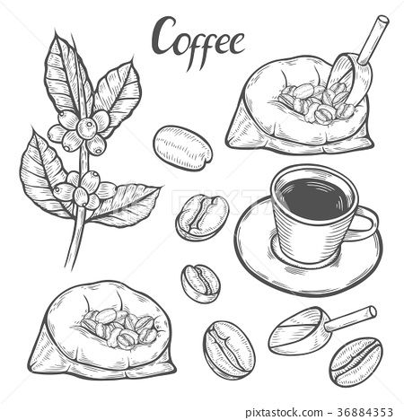 Coffee plant branch 36884353