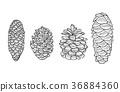 Pine cone set. 36884360
