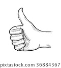 Hand showing symbol Like. 36884367