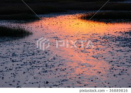 台灣 香山 濕地 夕陽 36889816