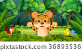 Tiger in the forest 36893536