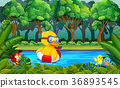 Duck swimming in the river 36893545