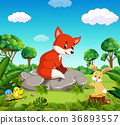 fox in the forest 36893557