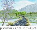 등나무 꽃 36894174