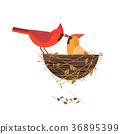 鳥兒 鳥 卡 36895399