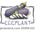 Vector simple illustration of bell eggplants. 36896162