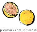 붓 그리기 과일 자몽 36896738
