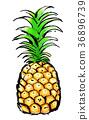 붓 그리기 과일 파인애플 36896739