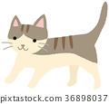 고양이 고양이 고양이 꿩 호랑이 36898037