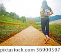 Woman walking on brick pathway in flower garden 36900597