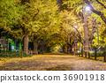 日本秋天東京Ginko神宮外苑划船樹 36901918