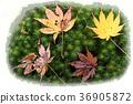 낙엽, 단풍, 단풍잎 36905872