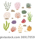 Seaweed, corals and stones. Underwater natural 36917059