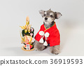 dog, dogs, new year's pine decoration 36919593