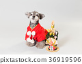 dog, dogs, new year's pine decoration 36919596