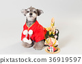 dog, dogs, new year's pine decoration 36919597