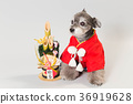 dog, dogs, new year's pine decoration 36919628