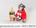 dog, dogs, new year's pine decoration 36919630