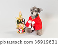 dog, dogs, new year's pine decoration 36919631