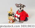 dog, dogs, new year's pine decoration 36919633