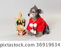 dog, dogs, new year's pine decoration 36919634